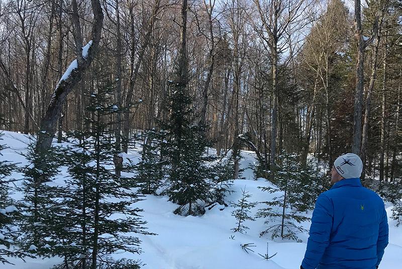 homme et forêt hiver